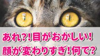 神田うの 目がおかしい 顔面崩壊 顔変わりすぎ