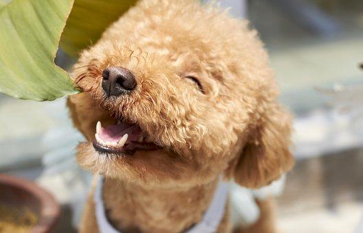 【画像】深田恭子の愛犬メロンパンナとぽっけが可愛い!犬の種類は何?