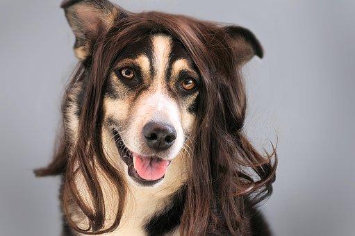 【画像】テコンドーの金原会長はヅラのアナゴさんに似てる?髪形が独特